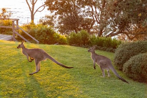 hyams-beach-house-luxury-accommodation-kangaroo